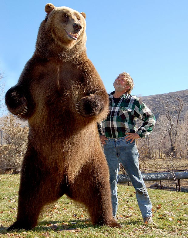 Kodiak Roaring And Standing Bear