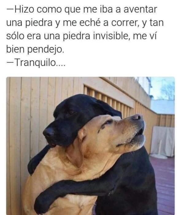 Memes fáciles perritos llorando abrazados