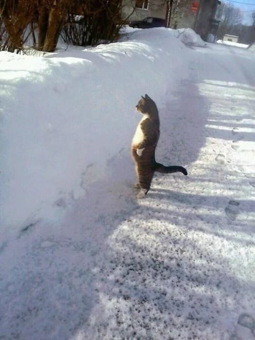 gato en dos patas observando la nieve