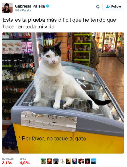 tuit no tocar al gato