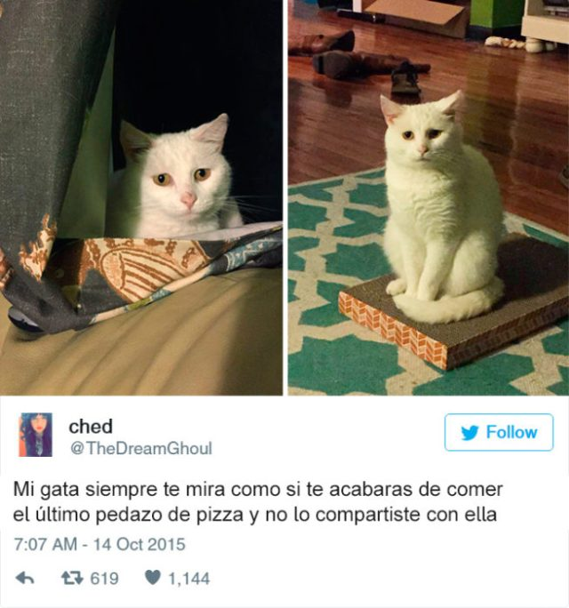 gato mirada triste