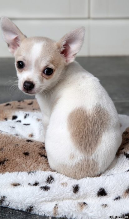 perro con mancha de corazón en su espalda