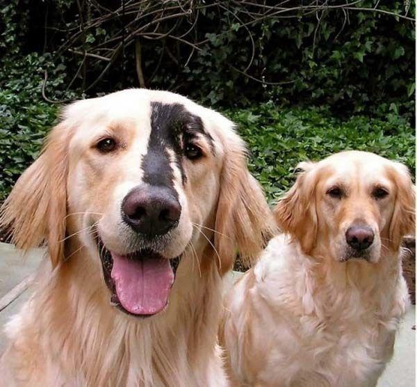 perro con mancha café en su cara