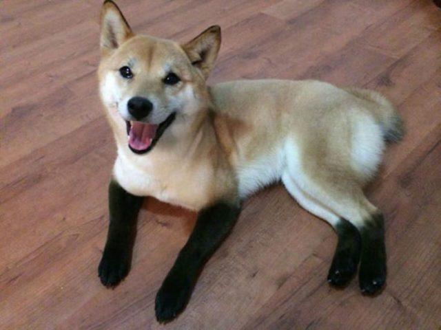 perro con patas negras y el cuerpo café