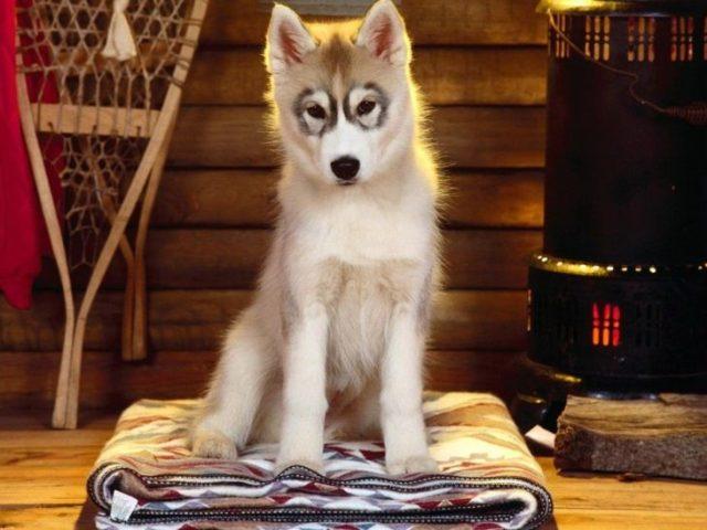 perro con círculos alrededor de los ojo s