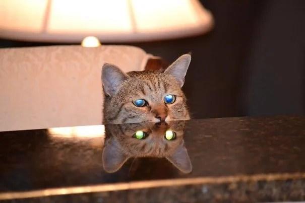 gato ojos poseídos