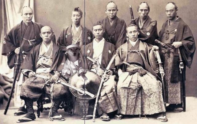 shiba inu perro samurais