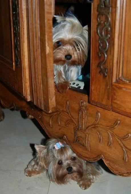 perro escondido en mueble