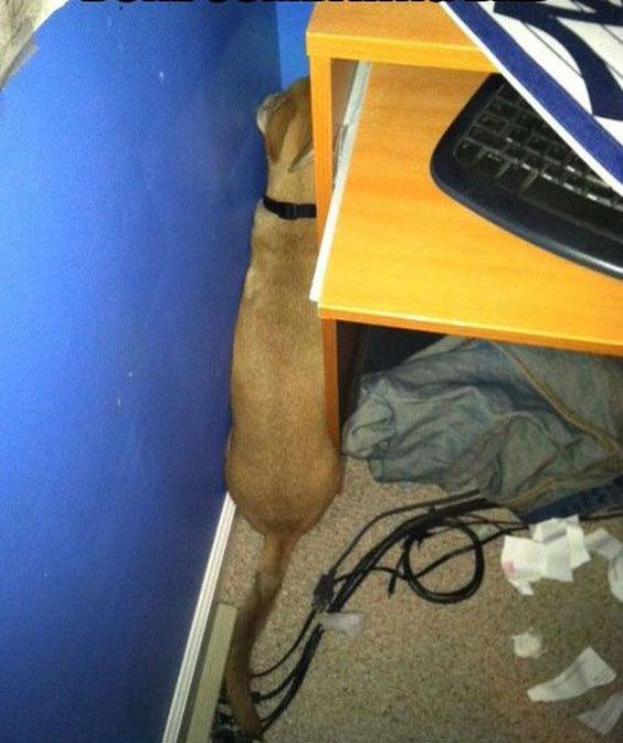 perro escondido entre un mueble y la pared