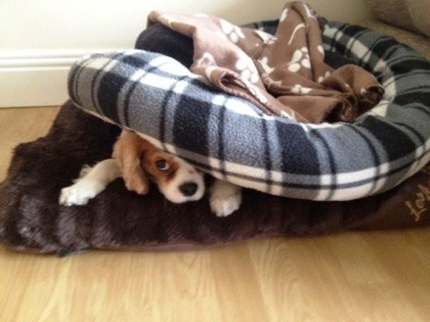 perro escondido abajo de su camita
