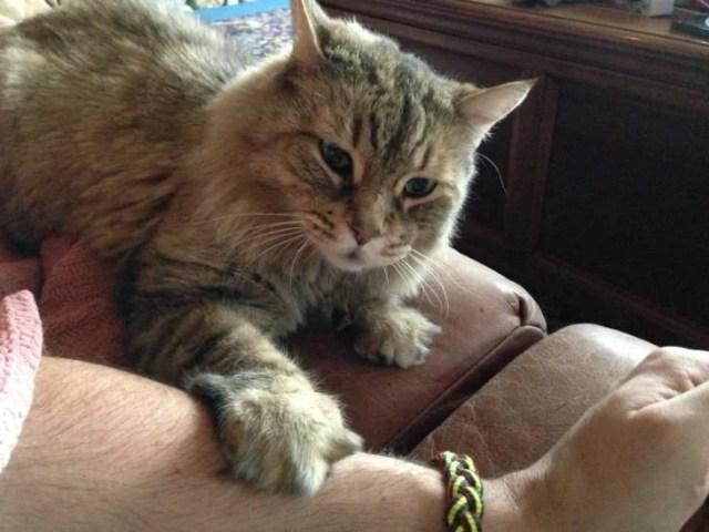 gato tocando a su propietaria con la pata