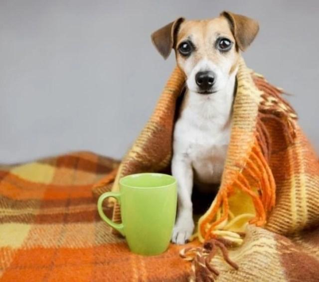 perrito enfermo gripe cobija
