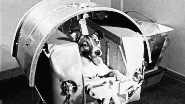 laika, el primer chucho mandado al espacio