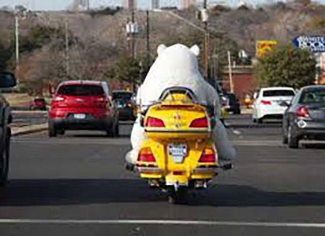 persona en botarga de oso polar en una motocicleta