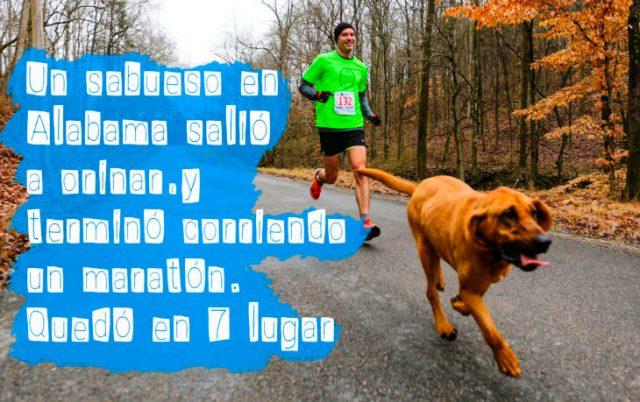 perro corriendo una carrera