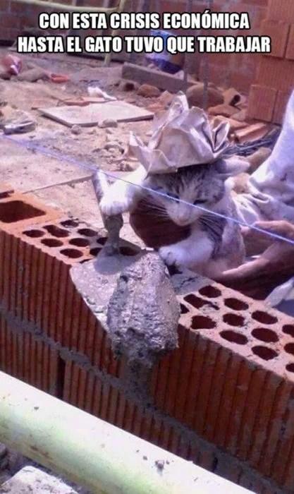 meme de gatito albañil