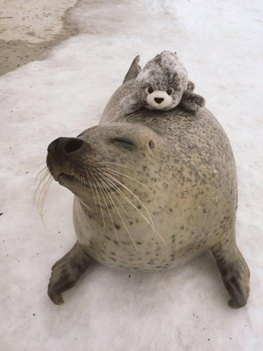 Foca feliz con foca d epeluche