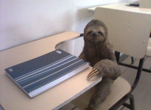 Le agrada la escuela