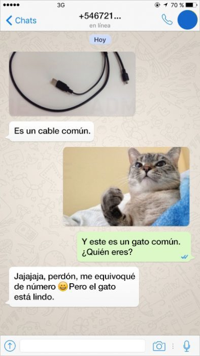 cable gatito charla whats app