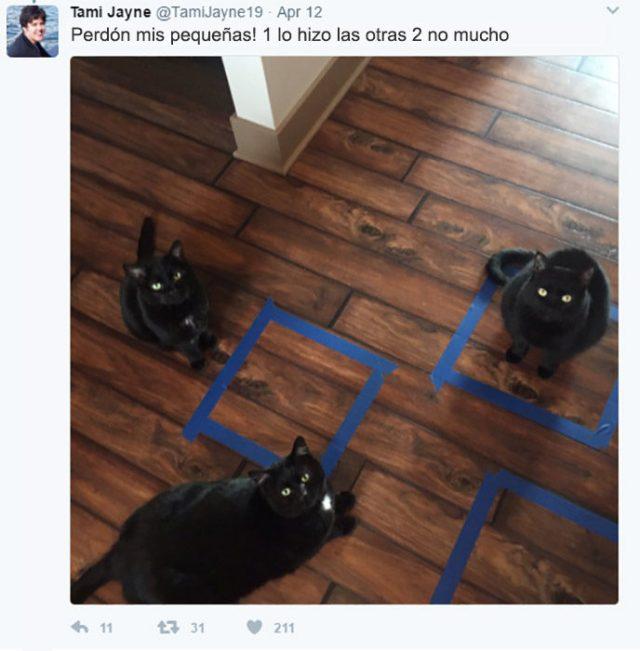 cosas gatitos 6