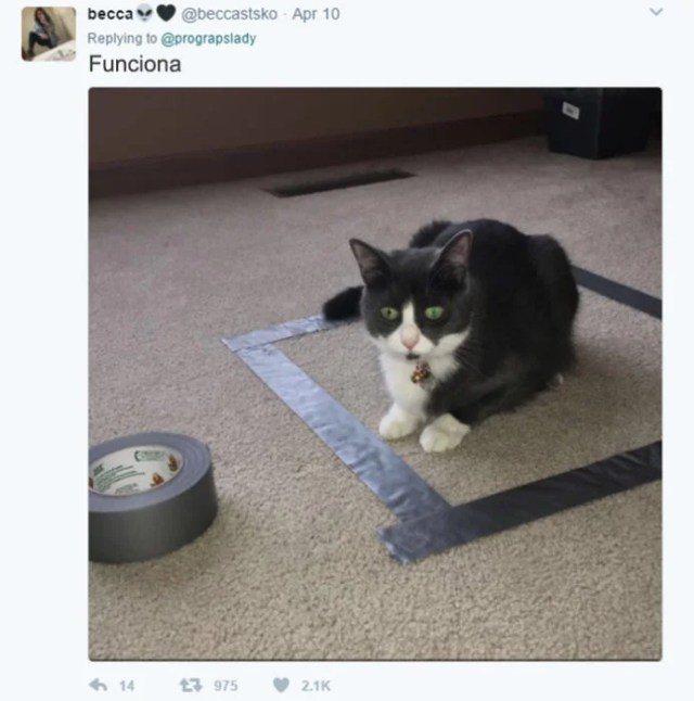 cosas gatitos 8