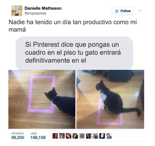 cosas gatos