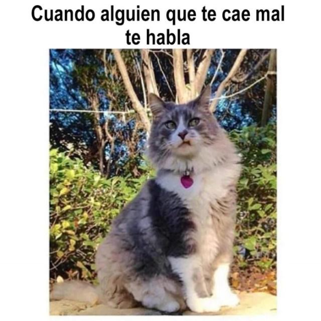 meme de gatito cuando alguien habla contigo