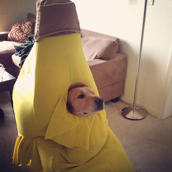 perro plátano