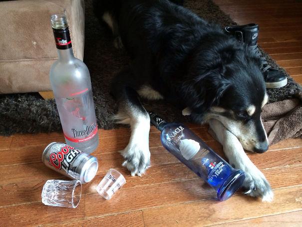 perro ebrio botellas