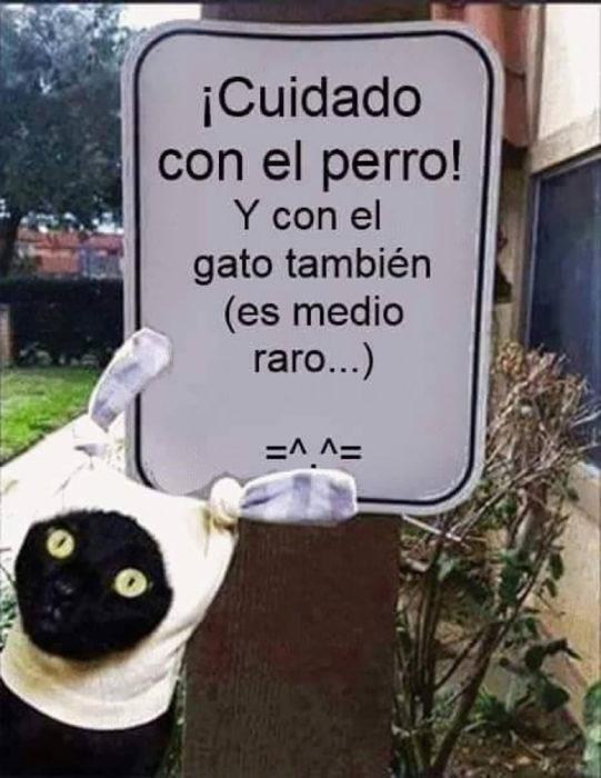 gato frente a cartel que afirma cuidado con el gato