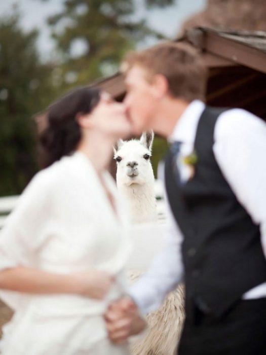 ¿Quien afirmó que sólo los humanos podían ir a las bodas?