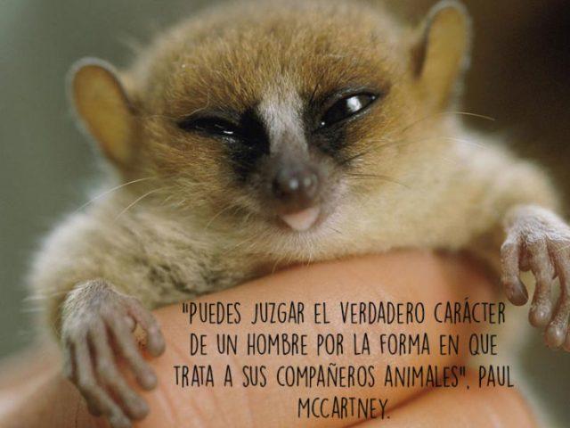 lémur animales foto oración Natgeo