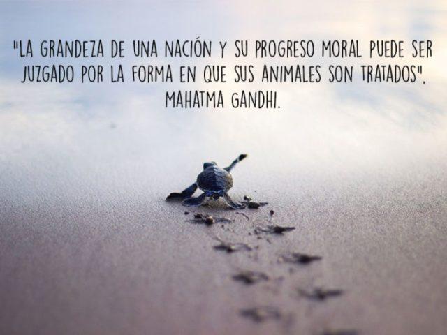tortuga animales foto oración Natgeo