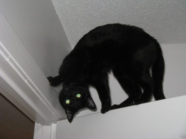 gatos satanicos 2