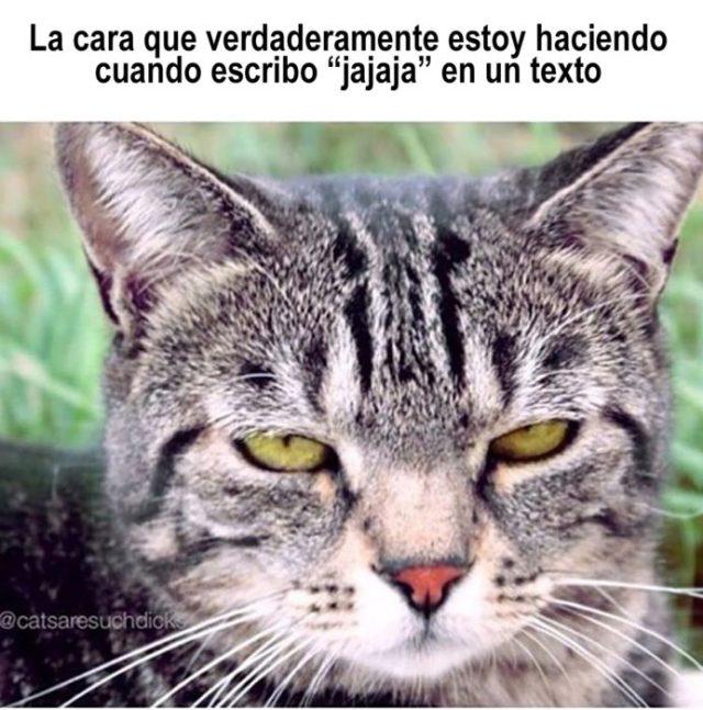 meme de gatito serie textear jaja
