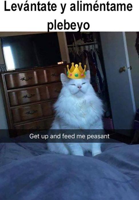 meme gatito con corona