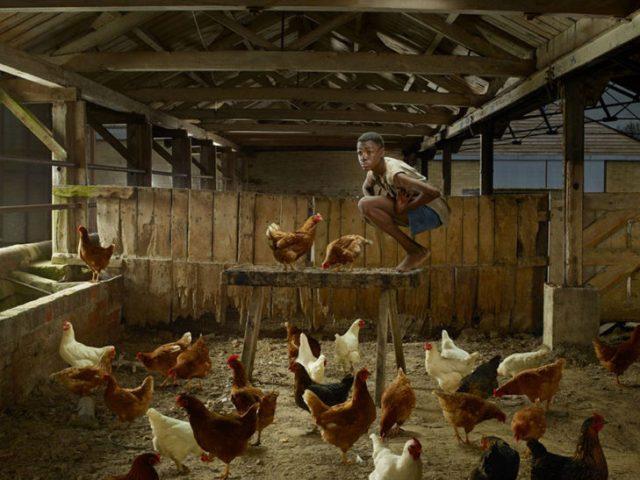 niño criado por gallinas