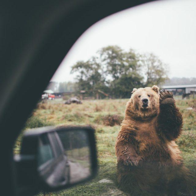 fotografía de un oso saludando amablemente