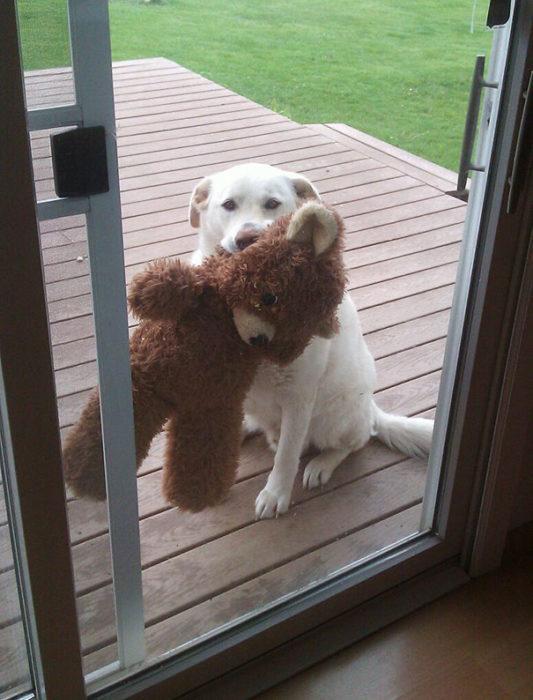Perro con su oso aguardando entrar a la casa