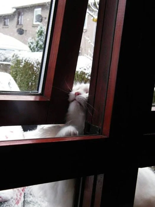 Gato queriendo entrar por la ventana