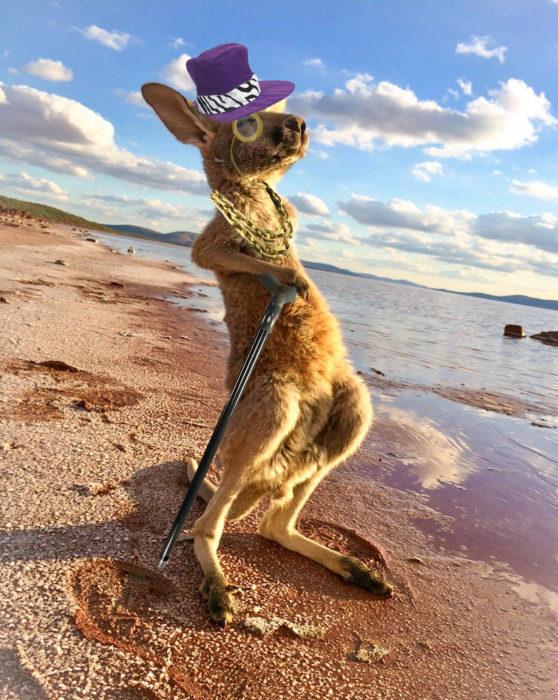 Batalla Photoshop canguro - con sombrero de copa y monóculo