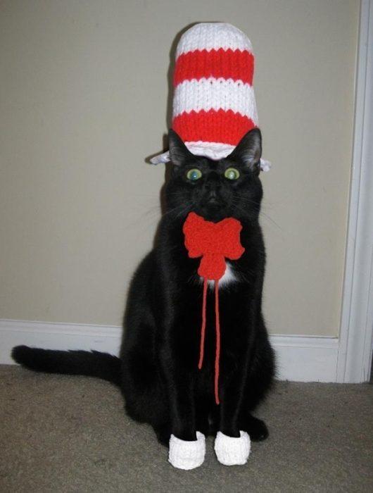 gato sombrero rojo