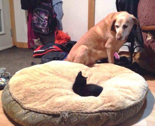 gato cama perro