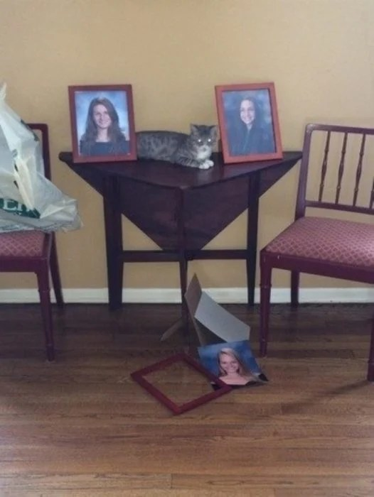 porta retratos gato