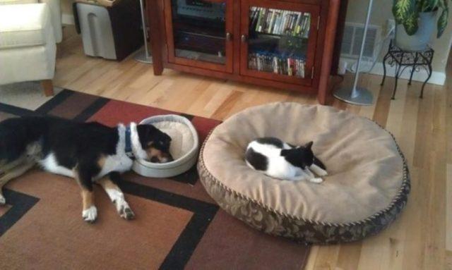 Gato acostado en la cama del chucho