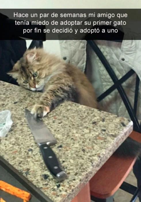 Snapchat gatito adoptado jugando con cuchillo