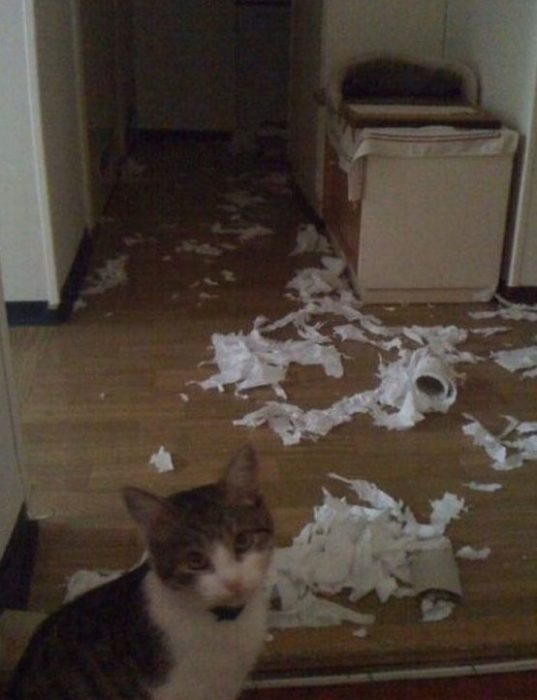 Gato destrozó todo el papel