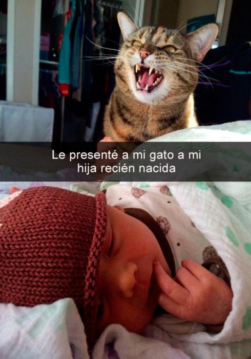 Snapachat gatito conoce a bebé