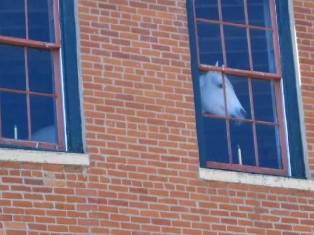 Imágenes incomprensibles - caballo adentro de edificio