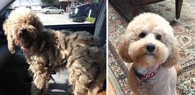 Perro antes y después